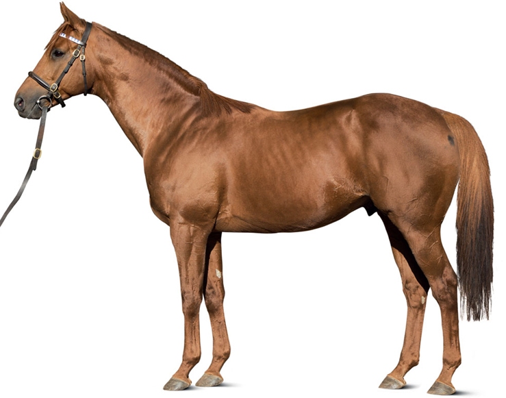 Haras du Logis - Stallions - Rio de la Plata